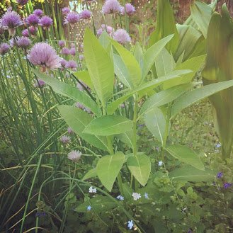 My Milkweed Brings All the Bugs to the Yard